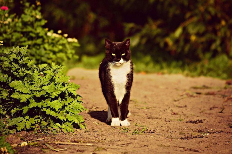 répulsif chats