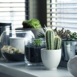 Comment concevoir un intérieur moderne avec des plantes ?