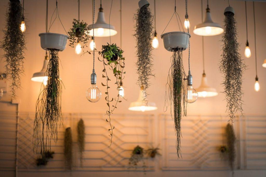Plantes, D'intérieur