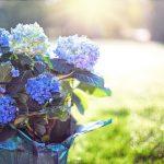 Des étudiants israéliens inventent le pot de fleurs éco-responsable