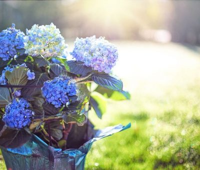 Pot, De fleurs intelligents