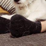 Comment se débarrasser des poils de chat dans la maison ?