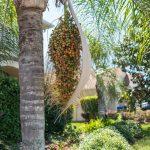 Quels palmiers extérieurs choisir pour son jardin?
