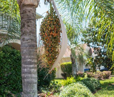 Palmiers, Jardin