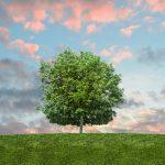 Tout savoir sur les tableaux arbres de vie