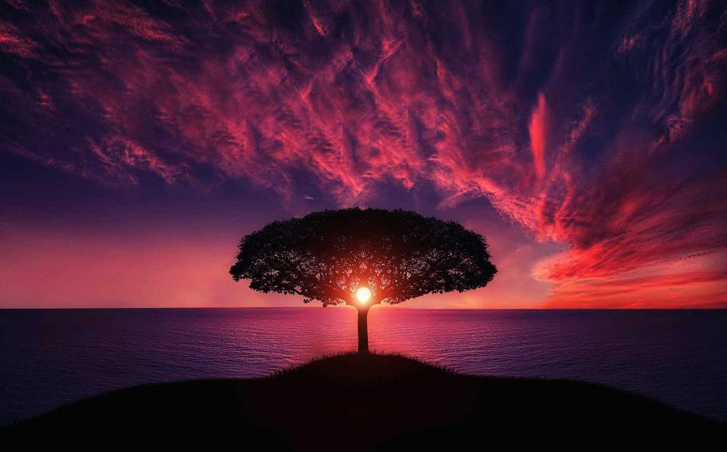 tableaux arbres de vie