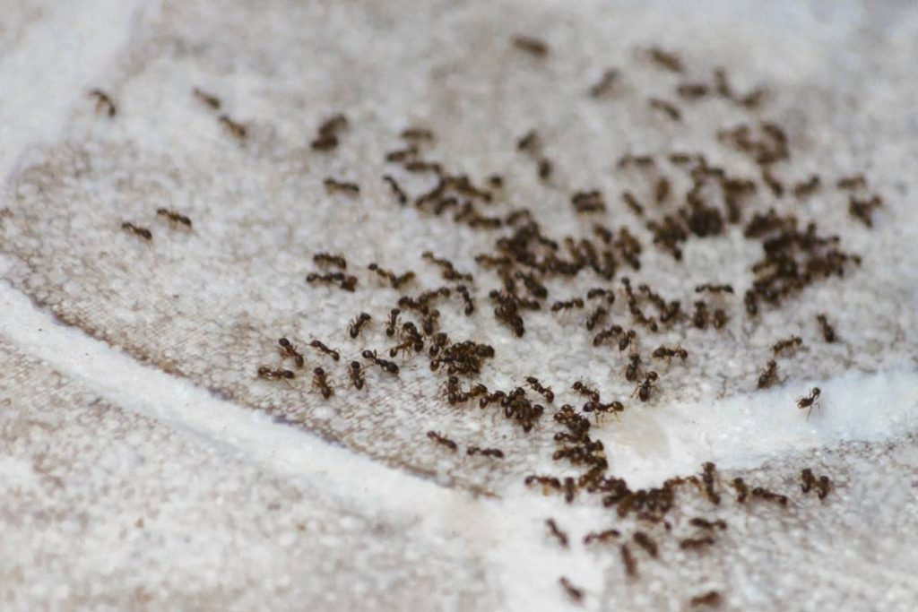 visu fourmis astuces.jpg